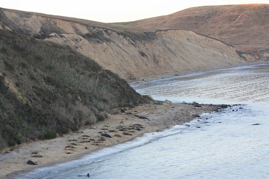 Elephant seal overlook near Chimney Rock, Point Reyes National Seashore