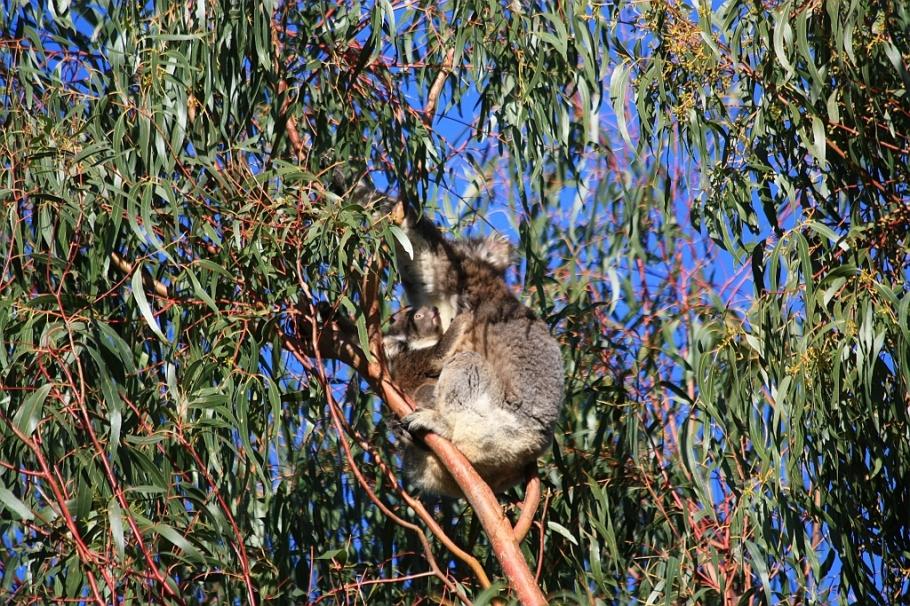 Hanson Bay Wildlife Sanctuary, Kangaroo Island, South Australia, Australia