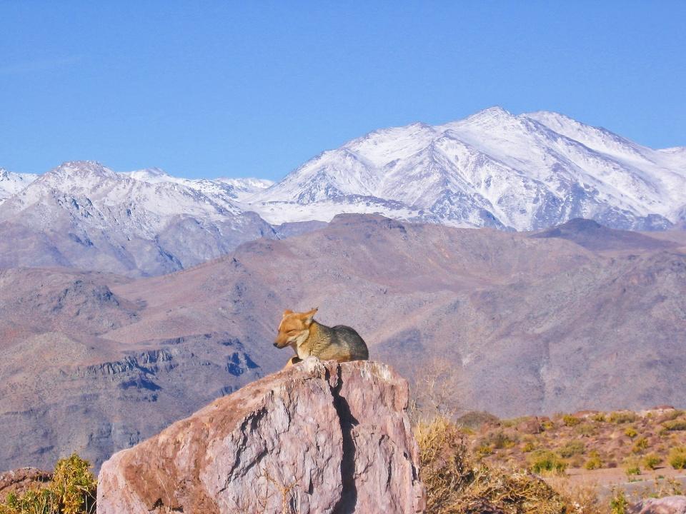 Cerro Tololo, Cerro Tololo Inter-American Observatory, CTIO, Región de Coquimbo, Chile, fotoeins.com