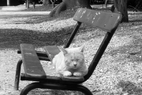 Abandoned domesticated cats, Jardin Botanico Carlos Thay, Palermo, Buenos Aires, Argentina, fotoeins.com, black and white, monochrome