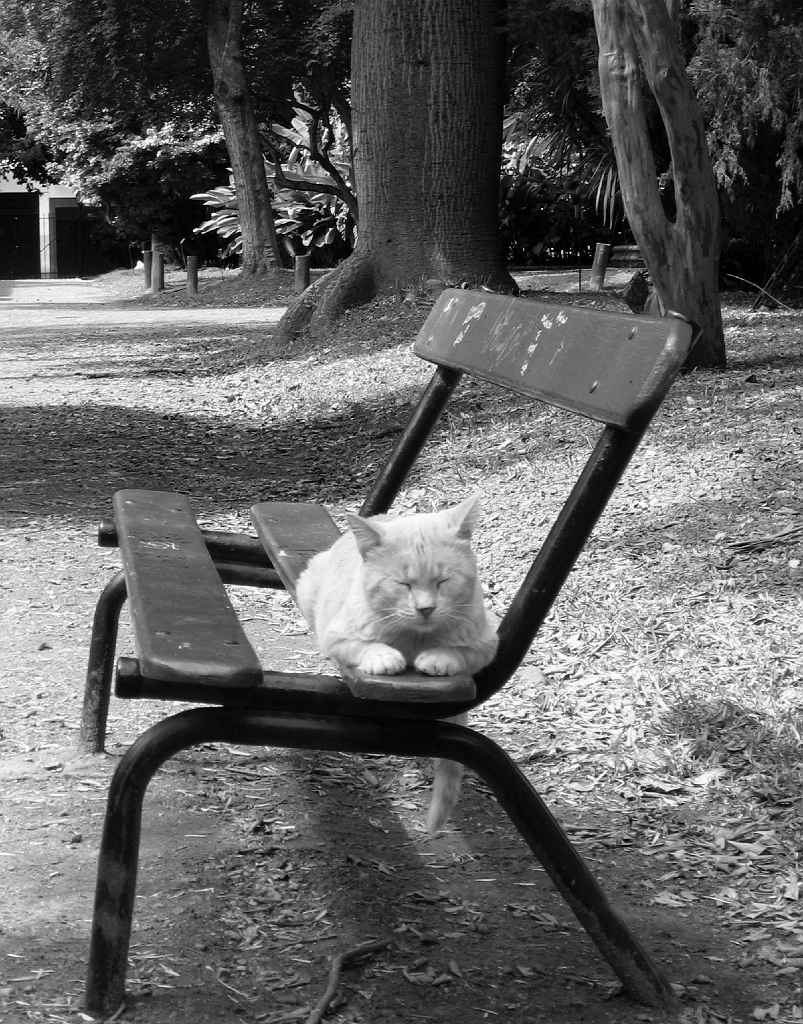 Abandoned domesticated cats, Jardin Botanico Carlos Thay, Palermo, Buenos Aires, Argentina, fotoeins.com