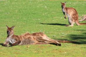 Hanson Bay Wildlife Sanctuary, Kangaroo Island, South Australia, Australia, myRTW, fotoeins.com