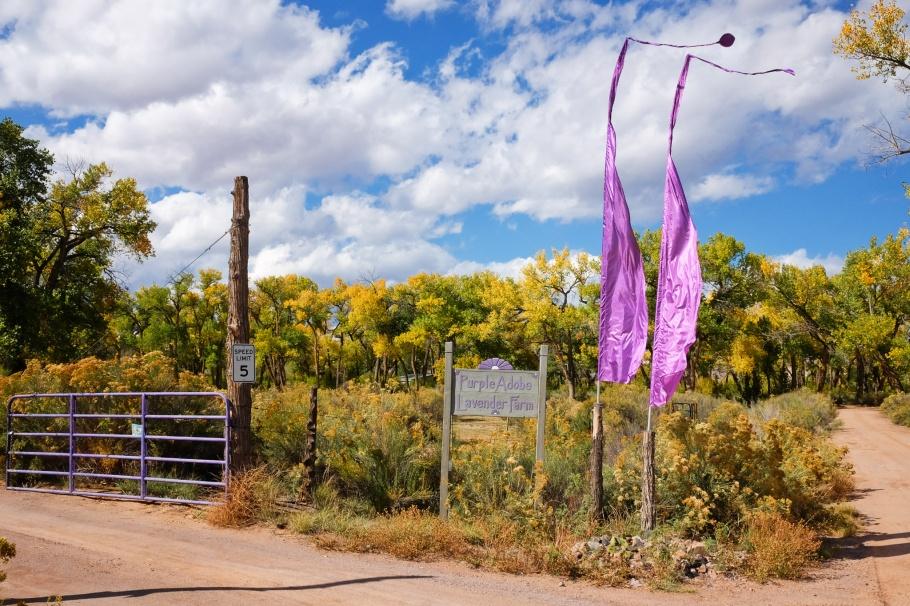 Purple Adobe Lavender Farm, lavender, US 84, US route 84, Abiquiu, New Mexico, USA, fotoeins.com
