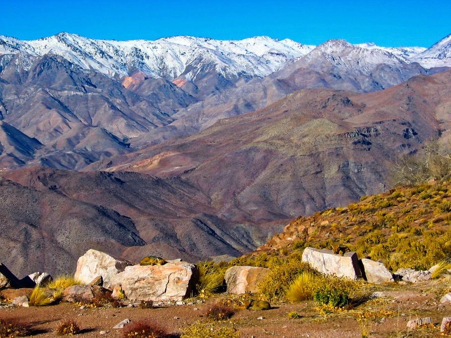 Desert fox, Andean fox, Culpeo zorro, Cerro Tololo Interamerican Observatory, Cerro Tololo, Region de Coquimbo, Chile, fotoeins.com