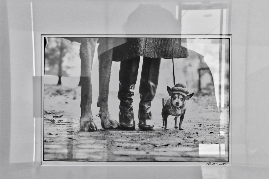 New York City (Dog legs), Elliott Erwitt, Dog Days, Polygon Gallery, North Vancouver, BC, Canada, fotoeins.com