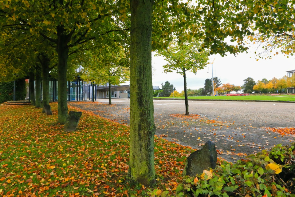 Joseph Beuys, 7000. Eichen, 7000 Oak Trees, documenta, Friedrichsplatz, Staatstheater, Kassel, Hesse, Hessen, Germany, Deutschland, fotoeins.com